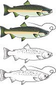 Salmon,Trout,Fish,Seafood,Symbol,Insignia,Vector,Cartoon,Fishing,Outline,Catch of Fish,Chum Salmon,Animal Scale,Silhouette,Underwater,Meat,Stream,Design,Fishing Hook,Fishing Bait,Ilustration,Mascot,Animal Fin,Backgrounds,Spawning,Computer Graphic,River,Isolated,Wildlife,Nature,Drawing - Art Product,Sea,Animal,Animals In The Wild,Catching