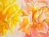 Flower,Single Flower,Rose - Flower,Paintings,Painted Image,Peach,Nature,Arts And Entertainment,Flowers,yellow rose,Arts Backgrounds,Yellow,Floral Pattern,Pink Color,Horizontal,peach rose