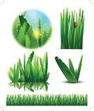 Grass,Insect,Blade of Grass,Vector,Drop,Leaf,Organic,Bush,Drinking Water,Lawn,Water,Nature,Green Color,Ladybug,Ilustration,Nature,Nature Backgrounds,Isolated,Environment,Plant,Reflection,Set