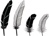 Feather,Quill Pen,Silhouette,Black Color,Pen,Striped,Writing,Isolated,Lightweight,Ink,Arts And Entertainment,Isolated Objects,Writing,Illustrations And Vector Art,Fragility,Fluffy,Simplicity,Purity,Smooth