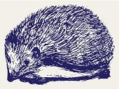 Hedgehog,Sketch,Porcupine,Scribble,Animal,Wildlife,Sharp,Incomplete,Design,1940-1980 Retro-Styled Imagery,Rodent,Image,Engraved Image,Abstract,Hand-drawn,Pencil Drawing,Ilustration,Bristle,Teen Pop,Vector,Mammal,Art Product,Modern Rock,Art,Doodle,Graffiti,Handwriting,Drawing - Activity,Computer Graphic,Drawing - Art Product,Scroll Shape,Animals In The Wild,Sepia Toned,Creativity,Rough,Outline