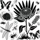 Protea,Butterfly - Insect,Single Flower,Flower,Silhouette,Rainforest,Stencil,Black And White,Africa,Insect,Dragonfly,Flying,Design,Assassin Bug,Icon Set,Animals And Pets,Plant,Nature,Computer Icon,Black Color,Tropical Climate,Nature,Design Element,Clip Art,Set,Illustrations And Vector Art,Insects,Symbol,Tropical Rainforest,Ilustration,Vector,Pincushion Flower,Flowers