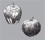 Food And Drink,Healthy Eating,Golden Delicious Apple,Healthy Lifestyle,Ilustration,Vegetarian Food,Vector,Dieting,Freshness,Black And White,Vegan Food,Macintosh Apple,Food,Ripe,Apple - Fruit,Fruit,Nature