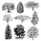 Tree,Oak Tree,Ilustration,Engraved Image,Silhouette,Engraving,Drawing - Art Product,Old,Pine Tree,Cypress Tree,Old-fashioned,Line Art,Botany,Forest,Oak,Bush,Isolated,Black And White,Nature,Leaf,Branch,Birch Tree,Gardening,Clip Art,Maple Tree,Collection,Single Object,Cut Out,Isolated On White,Loneliness,Solitude,Plant,Pine,Lumber Industry,Antique,Photograph,Maple,Set,Image Created 19th Century,Lush Foliage,Poplar Tree,Timber,Plants,Birch,Crown,Nature,Image,Side View,Variation,Illustrations And Vector Art,Environment,No People,Stem,foliagé,Park - Man Made Space