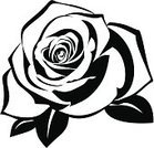 Rose - Flower,Black And White,Black Color,Stencil,Silhouette,Flower,Tattoo,White,Flower Head,Outline,Symbol,Ilustration,Isolated,Old-fashioned,Nature,Flowers,Blossom,Leaf,Beautiful,Vector Florals,Decoration,Pattern,Nature Backgrounds,Design,Drawing - Art Product,Illustrations And Vector Art,Ornate,Petal,White Background,Plant,Style,Vector,Computer Graphic,Contour Drawing,Close-up