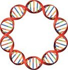 DNA,Circle,Helix Model,Molecular Structure,Science,Molecule,Genetic Research,Three-dimensional Shape,Biotechnology,Healthcare And Medicine,Human Cell,Research,Genetic Modification,Protein,Symbol,Twisted,Isolated,Chemistry,Artificial Model,Biochemistry,Multi Colored,Spiral,Design,Biology,Vector,Ilustration