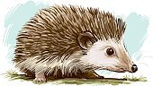 Hedgehog,Consoling,Vector,Animal,Ilustration,Nature,Wild Animals,Illustrations And Vector Art,Vector Cartoons,Animals In The Wild,Wildlife,Mammal,Animals And Pets