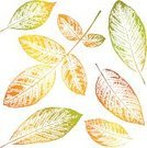 Leaf,Silhouette,Back Lit,Rubber Stamp,Postage Stamp,Leaf Vein,Printout,Print,Textured,Textured Effect,Autumn,Painted Image,Paint,Outline,Plant,Painting,Orange Color,Posing,Color Image,Symbol,Image,Ornate,Digitally Generated Image,Pattern,Falling,Nature,Sign,Vector,Yellow,Color Gradient,Simplicity,Computer Graphic,Design Element,Part Of,Colors,Decoration,Contour Drawing,Ilustration,Style