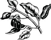 Nature,Formal Garden,Tree,Branch,Plant,Food,Leaf,Cherry,Vector,Dogwood,Computer Graphic,Fruit