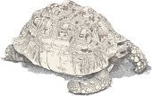 Tortoise,Galapagos Islands,Turtle,Animal Scale,Sketch,Domestic Animals,Animals In The Wild,Animal Skin,Reptile,Animal,Warty,Pets,Vector,Ilustration,Large,Animal Shell