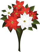 Bouquet,Red,Poinsettia,Ilustration,Petal,White,Single Object,White Background,Year,Christmas,Decoration,Green Color,Vector,Flower Head,Symbol,Decor,Blossoming,Gift,Season,Leaf,Flower,Plant,Cultures
