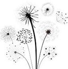 Dandelion,Black Color,Silhouette,Flower,Vector,Plant,Botany,Seed,Ilustration,Summer,Growth,Gray,Nature,Backgrounds,Meadow,Biology,Stem,Wind,Non-Urban Scene,Beauty In Nature,Fluffy,Collection,Flying