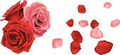 Rose - Flower,Flower,Red,Bouquet,Valentine's Day - Holiday,Pink Color,Love,Wind,Cut Flowers,Petal,Flying,Falling