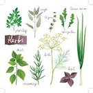 Herb,Sage,Rosemary,Thyme,Mint Leaf - Culinary,Leaf,Basil,Spice,Parsley,Peppermint,Dill,Vector,Food,Ilustration,Plant,Garnish,Vegetable Garden,Vegetable,Arugula,Cooking,Freshness,Organic,Painted Image,Eating,Healthy Eating,Growth,Lifestyles,Twig,Collection,Nature,Close-up,Set,Design,Ingredient,Spearmint,Backgrounds,Branch,Vegetarian Food,Seasoning,Group of Objects,Green Color,Raw Food,Onion