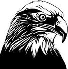 Eagle - Bird,Animal,Black Color,Black And White,Vector,White,Animal Head,Symbol,Bird,Ilustration,Bird of Prey,Computer Graphic,Feather,Furious,Feather,Determination,Contrasts,Beak,Dark,Isolated On White,High Contrast,Staring