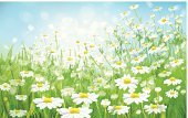 Chamomile Plant,Flower,Chamomile,Summer,Landscape,Springtime,Day,Sunlight,Field,Sky,Defocused,Meadow,Lawn,Green Color,Sun,Sunny,Floral Pattern,Backgrounds,Environment,Blue,Nature