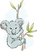 Koala,Young Animal,Eucalyptus Tree,Animals In The Wild,Australia,Mammal,Nature,Marsupial,Cartoon,Young Marsupial,Animal Themes,Ilustration,Cute,Wildlife