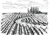 Vineyard,Winery,France,Italy,Bordeaux,Sketch,Rural Scene,Retro Revival,Painted Image,Cultures,Valley,House,Landscaped,Tree,Farm,Landscape,Ornate,Grape,California,Road,Nature,Old,Leaf,Summer,Ilustration,Branch,Pencil Drawing,Plant,Cloud - Sky,Pencil,Romance,Fruit,Field,Village,Beaujolais Region,Land,Vector,Harvesting