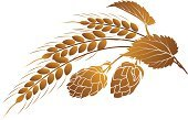 Hop,Barley,Beer - Alcohol,Wheat,Malt,Label,Vector,Brewery,Plant,Ilustration,Symbol,Cereal Plant,Ornate,Food And Drink,Ingredient,Leaf,Corn On The Cob,Rye,Agriculture,Design Element,Insignia,Curled Up,Draught,Drink,Drawing - Activity,Bitter,Sign,Decoration,Brown,Lager,Alcohol,Illustrations And Vector Art