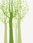 Springtime,Tree,Posing,Art,Leaf,Forest,Silhouette,Organic,Pattern,Woodland,Curve,Green Color,Outdoors,Computer Graphic,Deciduous Tree,Backgrounds,Abstract,Branch,Ilustration,Summer,Plant,Outline,Environment,Nature,Placard,Vector,Elegance,Drawing - Art Product,Ornate,Decoration,Stem,Wallpaper Pattern,Tree Trunk,Beauty In Nature,Vitality,Life,Symbol,Design,Shape,Creativity,foliagé,Growth,Season