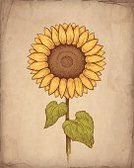 Sunflower,Old-fashioned,Individuality,Painted Image,Textured,Art Product,Computer Graphic,Postcard,Doodle,Creativity,Greeting Card,Old,Flower,Drawing - Art Product,Photographic Effects,fashioned,Paper,Yellow,Line Art,Nature,Ancient,Sepia Toned,Summer,Design,Dirty,Brown,Ilustration,Grunge,Cut Or Torn Paper,Sketch,1940-1980 Retro-Styled Imagery,Pencil Drawing