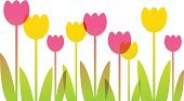 Tulip,Springtime,Flower,Vector,Frame,Pink Color,Season,Yellow,Colors,Leaf,Nature,Computer Graphic,Blossom,Isolated,Ilustration,Green Color