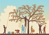Harvesting,Apple Tree,Picking,Crop,Fruit,Apple - Fruit,Orchard,Tree,Family,Ilustration,People,Silhouette,Homemade,Vector,Fruit Orchard,Outline,Organic,Toned Image,Multi Colored,Picking Up,Ripe