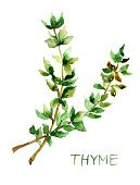 Watercolor Painting,Flower,Thyme,Herb,Leaf,Spice,Food,Organic,Vegetable,Plant,Painted Image,Green Color,Flora Family,Temperate Flower,Vegetarian Food,Condiment,Freshness