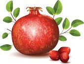 Pomegranate,Fruit,Vector,Food,arils,Organic,Full,Leaf,Seed,Green Color,Ripe,Antioxidant,Healthy Eating,Ilustration,Vitality,Red