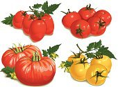 Tomato,Growth,Vegetable,Red,Leaf,Decoration,flavorful,Food,Yellow,Creativity,Gourmet,Vector,Ilustration,Photo-Realism,Collection,Multi Colored