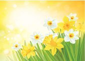 Springtime,Green Color,Grass,Daffodil,Field,Beauty In Nature,Vector,Blooming,Petal,Defocused,Blossom,Ilustration,Light - Natural Phenomenon,Landscape,Easter,Lawn,Season,Plant,Sky,Bouquet,Scenics,Sunlight,Flower,Meadow,Sun,Cute,Sunny,Leaf,Nature,Backgrounds,Flower Bed,Yellow,White,Shiny,Design