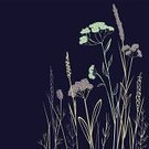 Night,Summer,Plant,Stem,Season,Meadow,Leaf,Blue,Grass,Computer Graphic,Straight,Nature