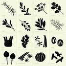 Herb,Silhouette,Basil,Symbol,Computer Icon,Juniper Tree,Spice,Cilantro,Seasoning,Ginger,Nutmeg,Cooking,Sage,Leaf,Vector,Turmeric,Fennel,Plant,Anise,Food,Organic,Vanilla,garcinia,Aromatherapy,Scented,Collection,Bay Horse,Ingredient,Cinnamon,Dill,berberis,Tasting,Computer Graphic,Poppy,Set