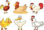 Duck,chook,Bird,Female Animal,Young Animal,Male Animal,Crown,Wing,Duckling,Animal Eye,Farm,Hen,Chicken - Bird,Tail,Computer Graphic,Rooster,Yellow,Feather,Beak,Animal,Barn,Clip Art,Plant,Father,Red,Backgrounds,Nature,Image,Mother,Photograph