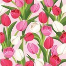 Tulip,Backgrounds,Flower,Floral Pattern,Seamless,Textured,Springtime,Continuity,White,Pattern,Repetition,Nature,Flower Head,Wallpaper Pattern,Decoration,Stem,Design Element,Ornate,Blossom,Beige,Petal,Red,Pink Color,Green Color,Leaf,Square,Bud,Plant,Design,Botany,Beautiful,Season,Ilustration,Vector,Backdrop,Maroon