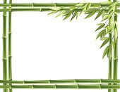 Frame,Tropical Rainforest,Pattern,Asia,East Asian Culture,Rainforest,Japan,Leaf,Tree,East,Chinese Culture,Botany,Nature,Close-up,Green Color,Stem,Vector,Branch,Forest,Copy Space,Gardening,Freshness,Bamboo,Growth