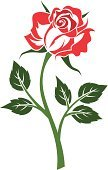 Rose - Flower,Stem,Tattoo,Silhouette,Leaf,Isolated,Backgrounds,Vector,Old-fashioned,Pattern,Green Color,Red,Nature,Design,Style,Maroon,Symbol,Flower,Flower Head,Close-up,White Background,Ornate,Blossom,Outline,Design Element,Petal,Ilustration,Retro Revival,Decoration,Plant,Beautiful,Contour Drawing,Drawing - Art Product