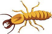 Termite,Vector,Insect,Armed Forces,Isolated,Isolated On White,Animal,Pest,Danger,Wood - Material