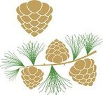 Pine Cone,Larch Tree,Plant,Design Element,Branch,Green Color,Vector,Brown