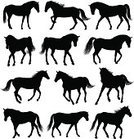 Silhouette,Horse,Pony,Running,Dressage,Standing,Livestock,Ilustration,Stallion,Mare,Collection,Animal,Vector,Isolated,Image,Set,Isolated On White,Mammal,Black Color,Computer Graphic,Elegance,Walking