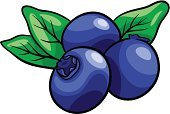 Blueberry,Blue,Berry Fruit,Vegetarian Food,Single Object,Dieting,Vector,Juicy,Food,Ilustration,Healthy Eating,Freshness,Ripe,Drawing - Art Product,Clip Art,Leaf,Fruit,Healthy Lifestyle,Green Color,Cartoon