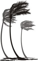 Palm Tree,Storm,Bending,Tree,Beach,Landscape,Plant,Gale,Coconut Palm Tree,Ilustration,Tall,Tropical Climate