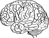 Human Brain,Sketch,Isolated,Drawing - Activity,Vector,Ilustration