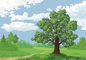 Tree,Cloud - Sky,Vector,Grass,Landscape,Forest,Sky,Plant,Deciduous Tree,Meadow,Land,Season,Lush Foliage,Weather,Springtime,Nature,Environment,Blue,Brown,Botany,Crown,Russia,Outdoors,Branch,Hollow,Summer,Woodland,Oak Tree,Copse,Scenics,Green Color,Growth,Tree Trunk,Leaf,Glade,Organic,Pine Tree,No People,Wildlife,Horizontal,Rural Scene,Coniferous Tree