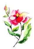 Flower,Watercolor Painting,Ilustration,Painted Image,Flowering Plant,Flower Head,Image,Flower Arrangement