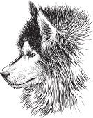 Sled Dog,Dog,Sketch,Fur,Snout,Profile View,Animal Head,Mammal,Drawing - Art Product,Siberian Husky,Domestic Animals,Ilustration,Candid,Isolated On White,Pets,Portrait,Cute,Animal Ear