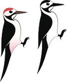 Woodpecker,Red,Sign,Black Color,Symbol,Design Element,Bird,Isolated,Vector,Great Spotted Woodpecker,White,Wildlife