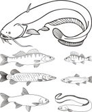 Catfish,Fishing,Trout,Perch,Saltwater Eel,Fish,Vector,Animal,Catch of Fish,Floating On Water,Ilustration,Single Object,Freshwater,Minnow,Isolated,Water,Lake,Black Color,River,Shallow,Pike,Sport,Freshwater Fishing,Fishing Hook,Dry,Fishing Bait