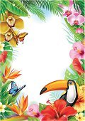 Toucan,Bird of Paradise,Tropical Rainforest,Frame,Leaf,Tropical Climate,Flower,Picture Frame,Blooming,Backdrop,Vector,Wire Mesh,Flower Head,Animal,Season,Blossom,Butterfly - Insect,Plant,Stem,Backgrounds,Red,Nature,Bird,Summer,Yellow,Vitality,Orchid,Hibiscus,Frangipani,Petal