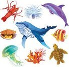 Computer Icon,Symbol,Whale,Icon Set,Coral,Dolphin,Scallop,Fish,Sea Life,Set,Animal Shell,Jellyfish,Water,Animal,Lobster,Diving,Shell,Multi Colored,Tropical Climate,Nature,Underwater,Vector,Sea Anemone,Mollusk,Turtle,Sea,Spotted Lobster,No People,Ilustration,Group Of Animals,Group of Objects,Horned Helmet Shell